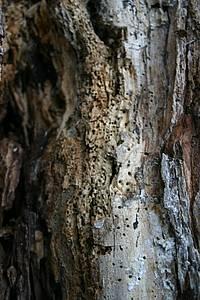 Es Gibt Bäume, Die Kein Käfer Fressen Will: Der Mond Und Der  Holzerntezeitpunkt Nimmt Auch Auf Die Dauerhaftigkeit Und Auf Die  Natürliche ...